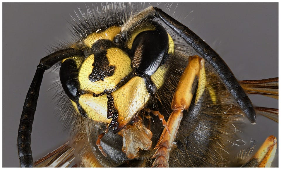 wasp control and removal toronto