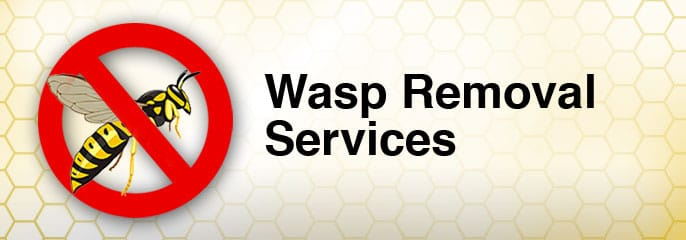 wasp removal and control toronto