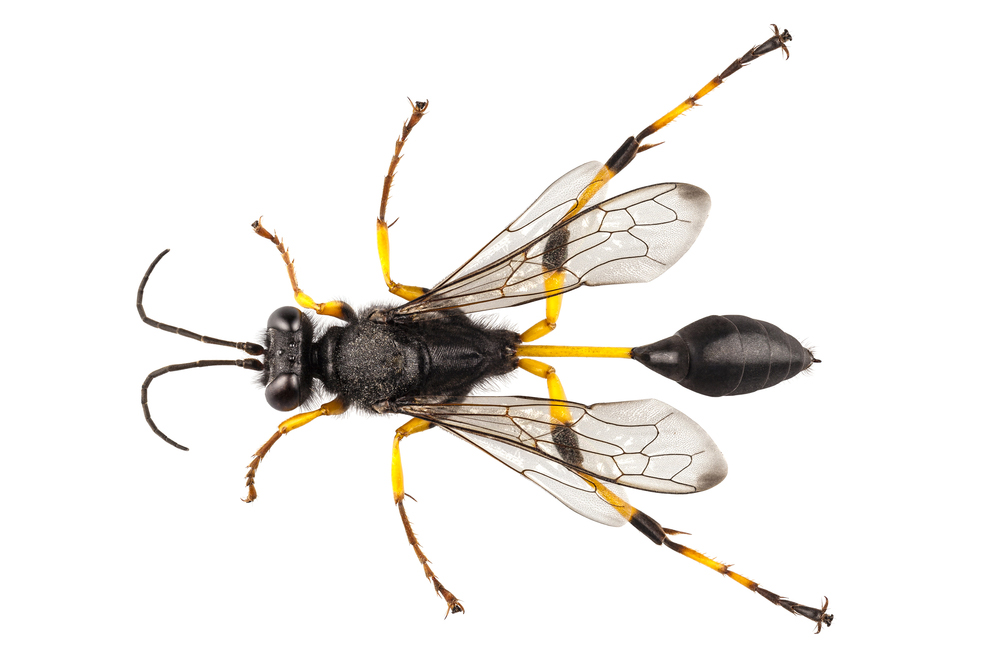 Difference between paper wasps, yellow jackets and solitary wasps like mud daubers