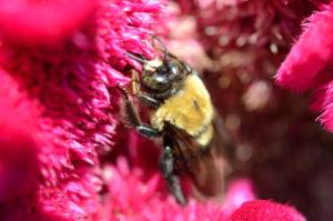 How to deter carpenter bees-ib