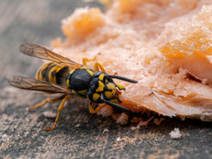 What you need to know about yellowjackets-ib